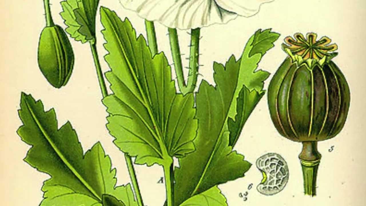 Traditional-Roman-Medicines