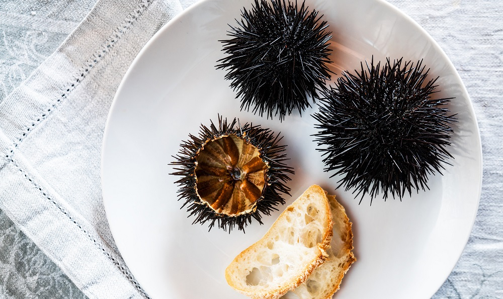 Boiled Sea Urchins